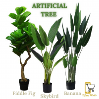 [SELLING FAST] Pokok Hiasan Viral Banana / Skybird / Fiddle Fig