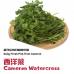 Cameron Watercress 300g+-/pkt